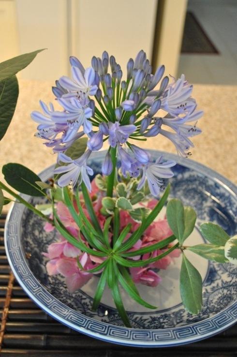 アガパンサス&紫陽花