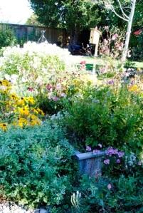 nancy's garden